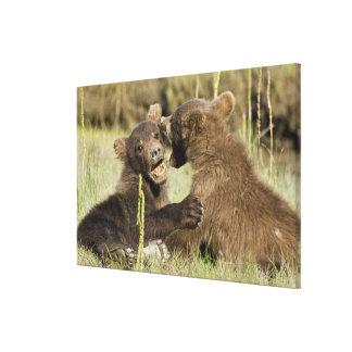 LOS E E U U Alaska Cachorros de oso costeros de Impresion En Lona