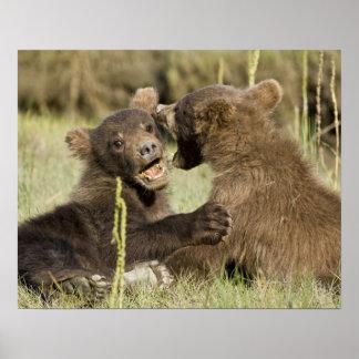 LOS E E U U Alaska Cachorros de oso costeros de Impresiones