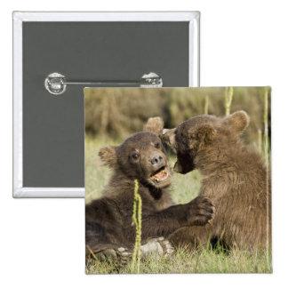 LOS E.E.U.U. Alaska. Cachorros de oso costeros de  Pin Cuadrado
