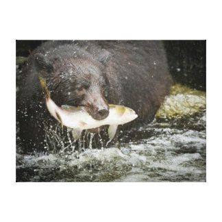 Los E E U U Alaska cala de Anan Primer del oso Impresión En Lienzo Estirada