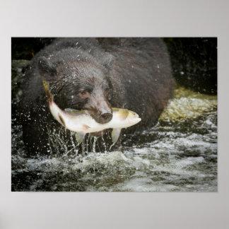 Los E E U U Alaska cala de Anan Primer del oso Impresiones