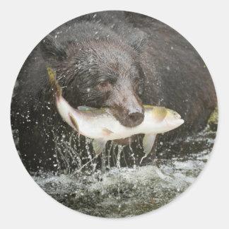 Los E.E.U.U., Alaska, cala de Anan. Primer del oso Pegatinas Redondas