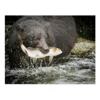 Los E.E.U.U., Alaska, cala de Anan. Primer del oso Postales