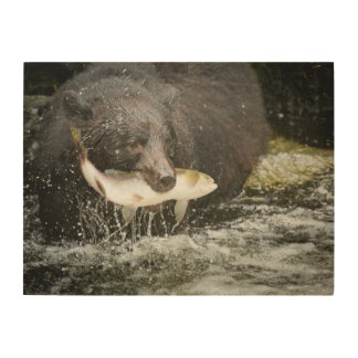 Los E E U U Alaska cala de Anan Primer del oso Cuadro De Madera