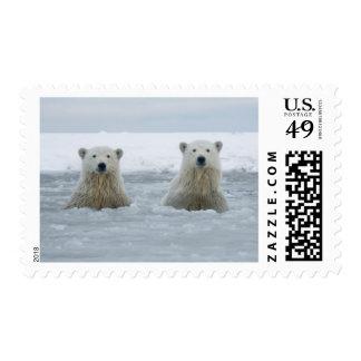 Los E.E.U.U., Alaska, cuesta del norte, 1002 áreas Franqueo