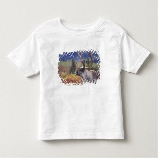 Los E.E.U.U., Alaska, Denali NP, caribú en tundra Camisas