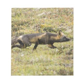 LOS E.E.U.U. Alaska. El Fox rojo acecha su presa e Bloc