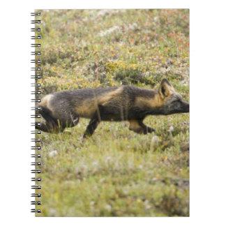LOS E.E.U.U. Alaska. El Fox rojo acecha su presa e Libro De Apuntes Con Espiral