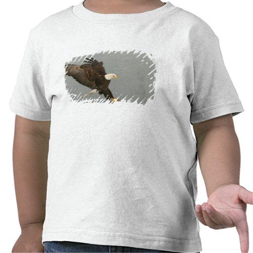 Los E.E.U.U., Alaska, home run. Águila calva en el Camisetas