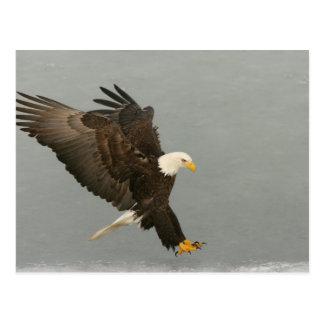 Los E.E.U.U., Alaska, home run. Águila calva en el Postal