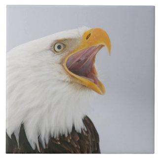 Los E.E.U.U., Alaska, home run. Águila calva que g Azulejo Cuadrado Grande