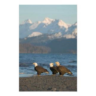 Los E.E.U.U., Alaska, home run, Haliaeetus de Eagl Fotos