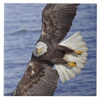 Los E.E.U.U., Alaska, home run. Salto del águila c Azulejo Cuadrado Grande