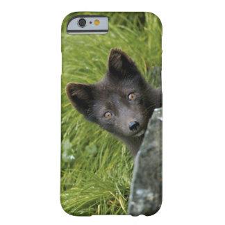 Los E.E.U.U., Alaska, islas de Pribilof, San Funda Para iPhone 6 Barely There