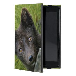 Los E.E.U.U., Alaska, islas de Pribilof, San iPad Mini Protectores