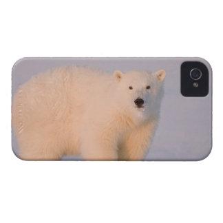 Los E.E.U.U., Alaska, llano costero 1002 de los 2  Case-Mate iPhone 4 Protectores