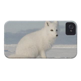 Los E.E.U.U., Alaska, llano costero 1002 de los 4  iPhone 4 Carcasas