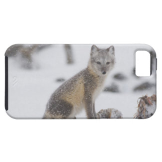 Los E.E.U.U., Alaska, llano costero 1002 del ANWR. Funda Para iPhone 5 Tough