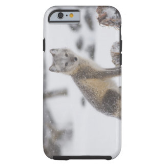 Los E.E.U.U., Alaska, llano costero 1002 del ANWR. Funda Para iPhone 6 Tough