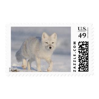 Los E.E.U.U., Alaska, llano costero 1002 del ANWR. Timbre Postal