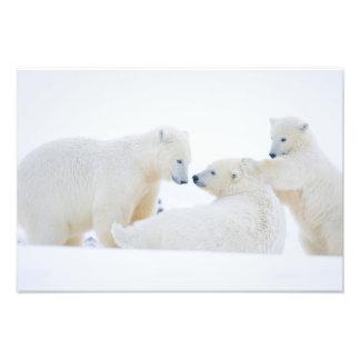 Los E.E.U.U., Alaska, llano costero 1002 del ártic Fotografia