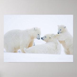 Los E.E.U.U., Alaska, llano costero 1002 del ártic Póster