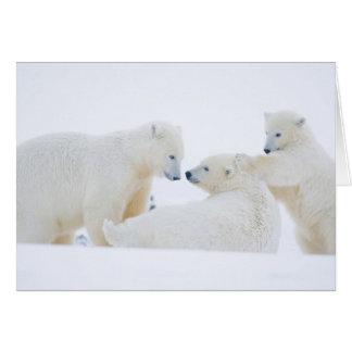 Los E.E.U.U., Alaska, llano costero 1002 del ártic Tarjeta De Felicitación