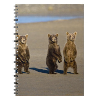 LOS E.E.U.U. Alaska. Los cachorros de oso costeros Notebook