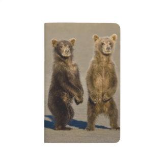 LOS E.E.U.U. Alaska. Los cachorros de oso costeros Cuadernos