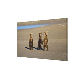 LOS E E U U Alaska Los cachorros de oso costeros Impresión En Lona