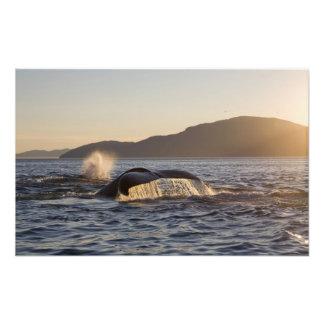 Los E.E.U.U., Alaska, Megaptera de la ballena joro Fotografías
