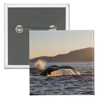 Los E.E.U.U., Alaska, Megaptera de la ballena joro Pin Cuadrada 5 Cm