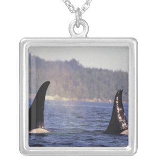 Los E.E.U.U., Alaska, orca emergente del paso inte Joyería