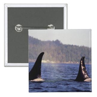 Los E.E.U.U., Alaska, orca emergente del paso inte Pin