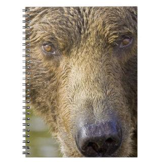LOS E.E.U.U. Alaska. Oso marrón costero de la Conc Libretas