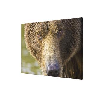 LOS E E U U Alaska Oso marrón costero de la Conc Lona Envuelta Para Galerías