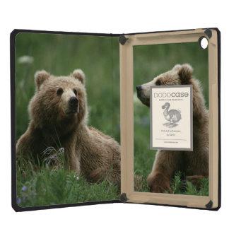 Los E E U U Alaska osos marrones del sub-adulto
