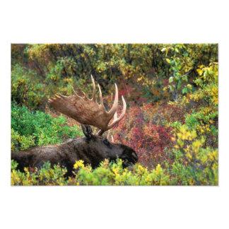 Los E.E.U.U., Alaska, parque nacional de Denali, a Arte Fotográfico