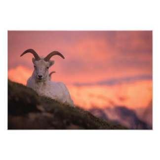 Los E.E.U.U., Alaska, parque nacional de Denali, D Fotografias
