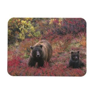 Los E.E.U.U., Alaska, parque nacional de Denali. O Imán Foto Rectangular