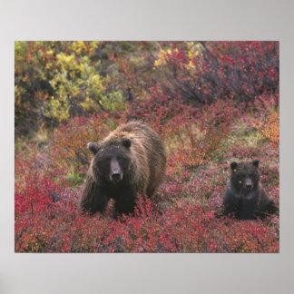 Los E.E.U.U., Alaska, parque nacional de Denali. O Impresiones