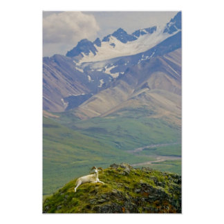 Los E.E.U.U., Alaska, parque nacional de Denali, p Posters