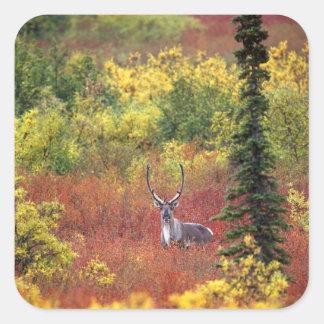Los E.E.U.U., Alaska, parque nacional de Denali. Pegatina Cuadrada