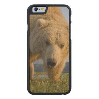 Los E.E.U.U., Alaska, parque nacional de Katmai, Funda De iPhone 6 Carved® Slim De Arce