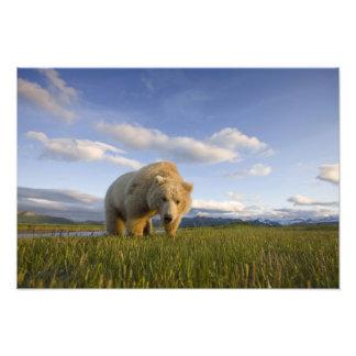 Los E.E.U.U., Alaska, parque nacional de Katmai, o Cojinete
