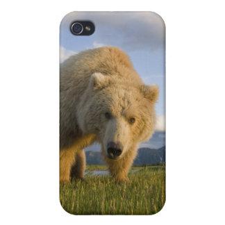Los E.E.U.U., Alaska, parque nacional de Katmai, o iPhone 4 Fundas