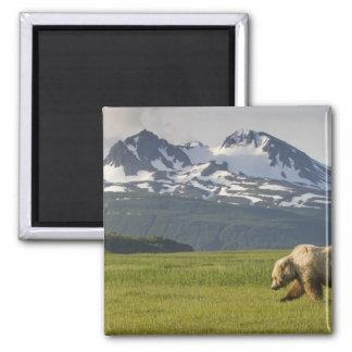 Los E.E.U.U., Alaska, parque nacional de Katmai, o Imán Cuadrado