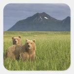 Los E.E.U.U., Alaska, parque nacional de Katmai, o Etiquetas