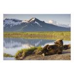 Los E.E.U.U., Alaska, parque nacional de Katmai, o Fotografías