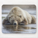 Los E.E.U.U., Alaska, parque nacional de Katmai, o Alfombrillas De Ratón